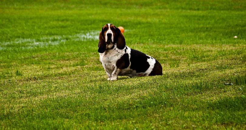 Cercasi quartiere a misura di cane